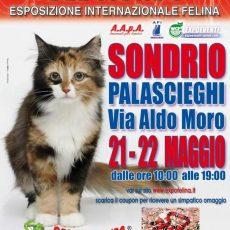 I GATTI PIU' BELLI DEL MONDO - Esposizione Internazionale Felina