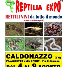 Reptilia